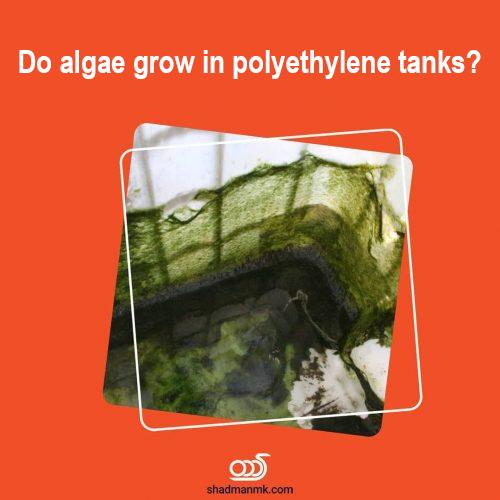 Do algae grow in polyethylene